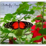 Wordless Wednesday – Butterfly Beauty
