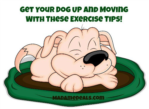 exercise dogs