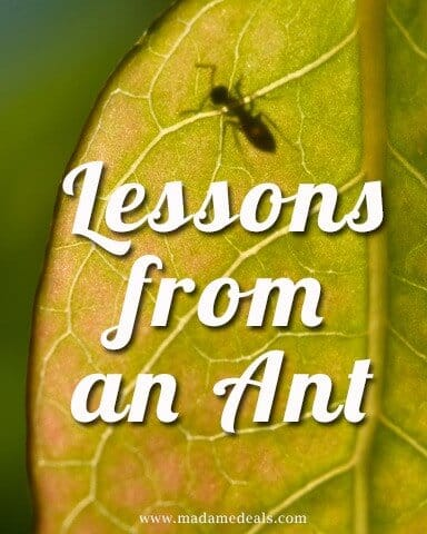 lessons-from-an-ant