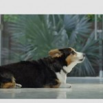 Purina® Beggin'® Party Poppers: Dog Rap – I Get Bacon
