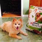 Save Big on Pet Food with Purina and Dollar General