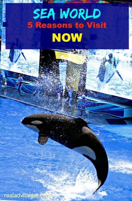 5 Things I Did Not Know About Sea World
