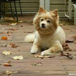 Keeping Our Dog Healthy with Iams®