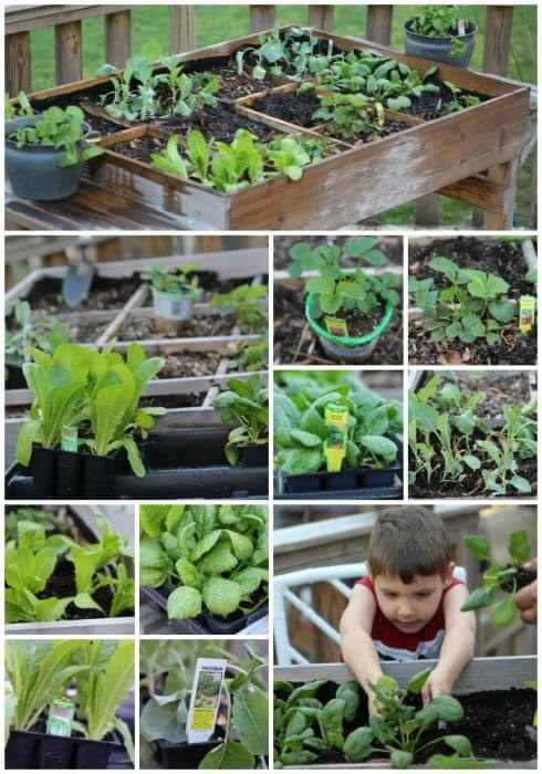 Table Gardening is a fantastic way to grow your own vegetables