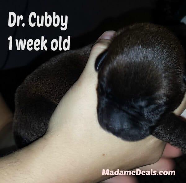 dr cubby