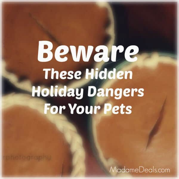 Keep your pets safe from these Holiday Hidden Pet Dangers