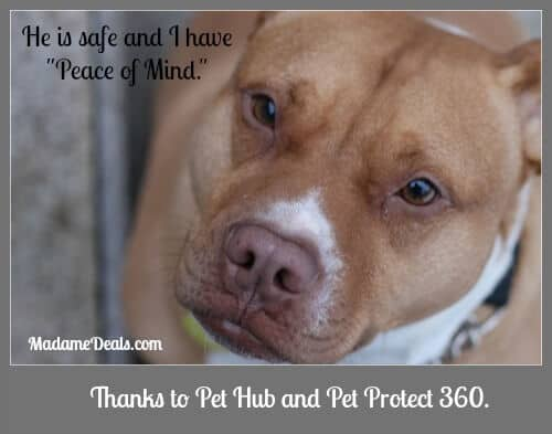 Keep Your Pets Safe with Pet Hub and Pet Protect 360