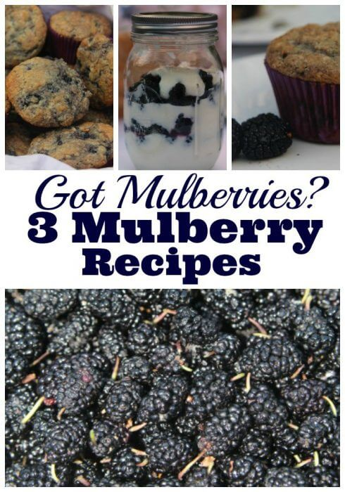 Got mulberries then you need a mulberry recipe