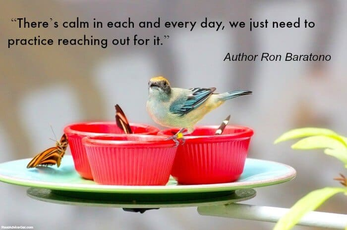 Karla's Korner - Keep Calm: Lessons from a Little Bird
